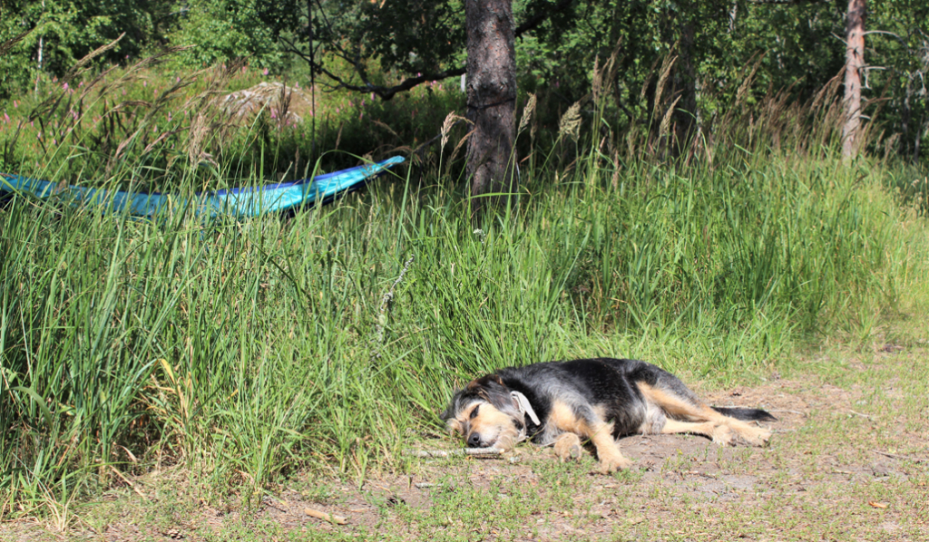 I förgrunden ligger en hund på sidan på marken. Längre bort hänger en blå hängmatta.