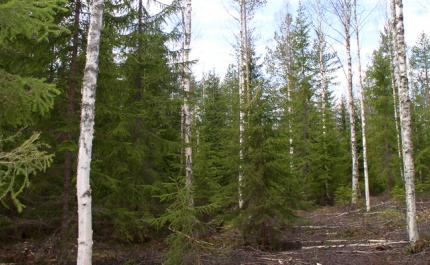 Så här anpassar du ditt skogsbruk till ett föränderligt klimat