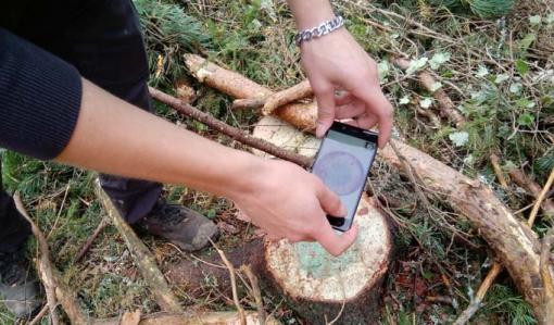 Skogsägare – kom ihåg det här för att skydda din skog mot rotrötan