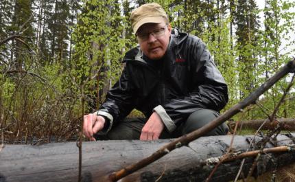 Bränd skog lockar insekter och tickor