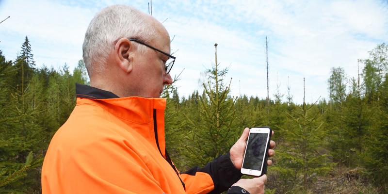 Jyrki Suojalehto tittar på sin mobiltelefon, där han har Laatumetsä-appen nerladdad. I bakgrunden syns plantskog.