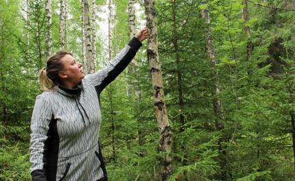 Ekogskog ger mervärde åt turismföretagare
