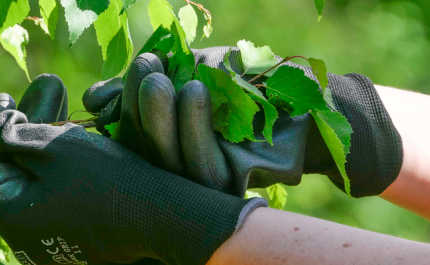 Ekologiska naturprodukter ger inkomster mellan avverkningarna