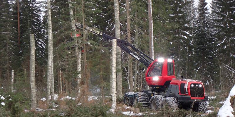 En skogsmaskin kapar en björk så det blir en högstubbe.