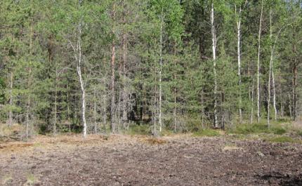 Tillväxt och kolbindning genom beskogning