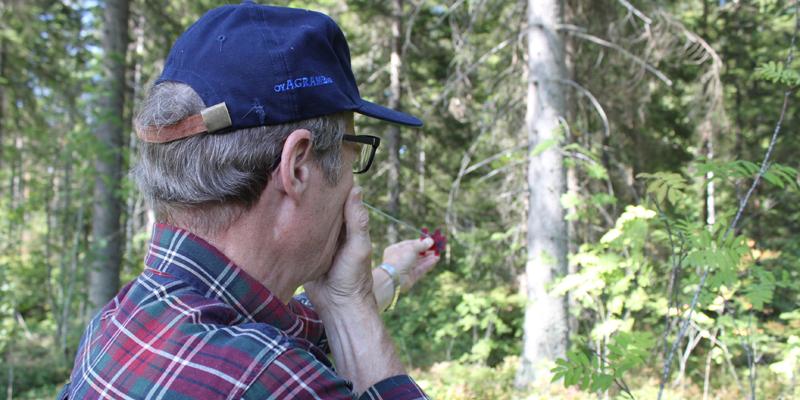 Skogsägare, lär dig åtminstone de här tre sätten att mäta