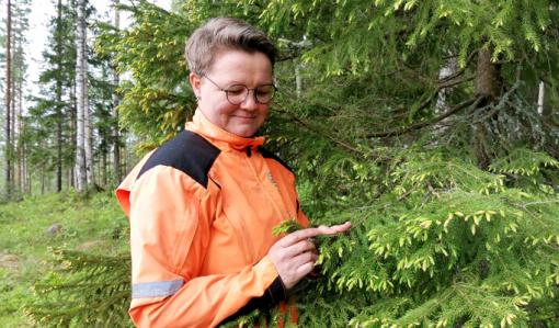 Anne Ruokonen står vid en gran och tittar på dess fräska granskott.