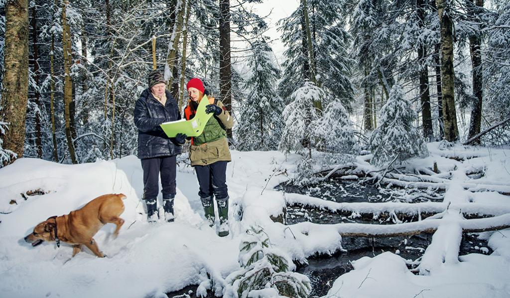 Skogsägaren Virpi Saarela och skogsexperten Minna Lautala studerar en skogsvårdsplan i en snöig skog. Skogsägarens hund springer ivrigt i snön. Till höger på bilden syns en källa och träd som fallit över källan.