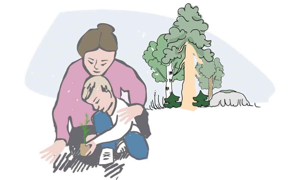 Skogsbruk enligt dina mål