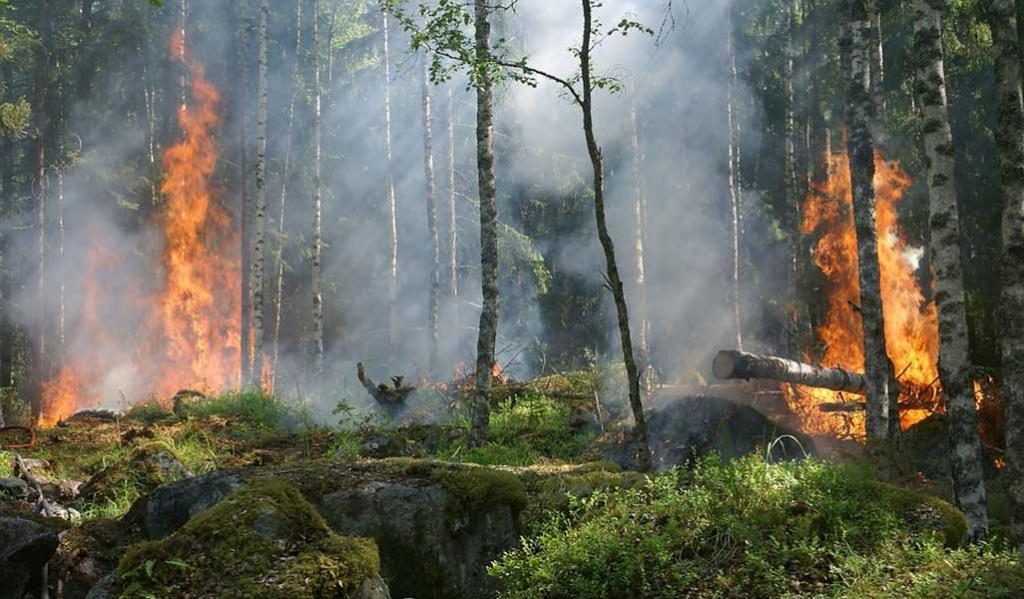 Det lönar sig att försäkra skogen för alla eventualiteter