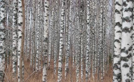 Nytt av trä