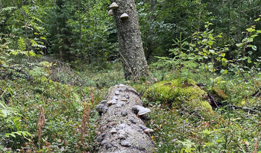 Låt naturvårdstäden göra sitt för naturen