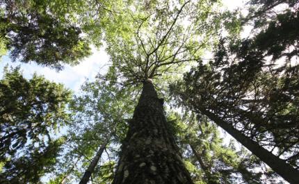 Skogscertifieringarna uppdateras – forskare ser flera utvecklingsbehov