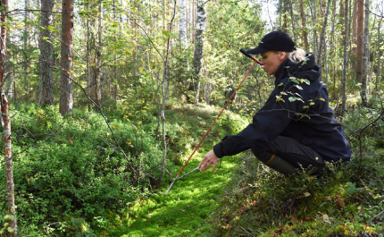 I torvmarksskogarna växer en ansenlig mängd träd – men hur lönar det sig att vårda skogarna?