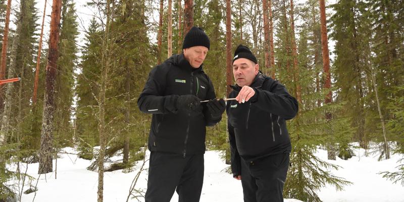 Ledande skogsvårdsexperten Markku Remes och skogsägaren Ari Sirviö står ute i skogen och studerar ett träprov som tagits på ett träd efter att skogen askgödslats.