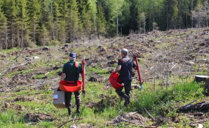 Klimatförändringen förändrar skogsvården