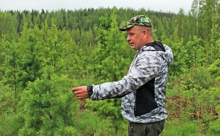 Gräs- och slyröjning är lönsamt arbete för skogsägaren