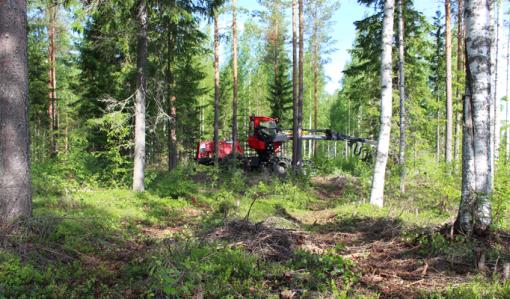 På bilden syns en avverkningsmaskin som gallrar skog genom korridorgallring.