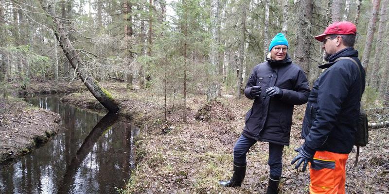 Skogsägaren Mauno Soronen och skogs- och naturrådgivaren Ari Karjalainen står i skogen och samtalar. Till vänster ringlar sig en bäck i naturtillstånd.