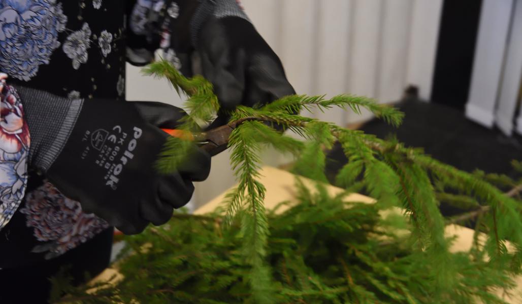 Närbild på en sekatör och ett par handskklädda händer som klipper grankvistar.
