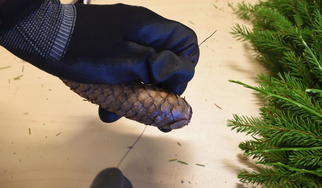 Närbild som visar hur man kan trä in ståltråden under fjällen på en grankotte.