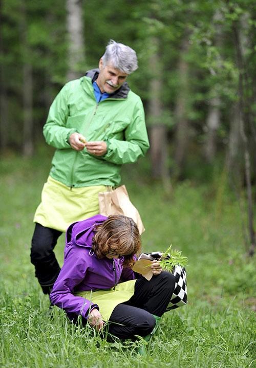 Jouko och Raija Kivimetsä i skogen. Raija Kivimetsä sitter på huk och plockar örter på marken.