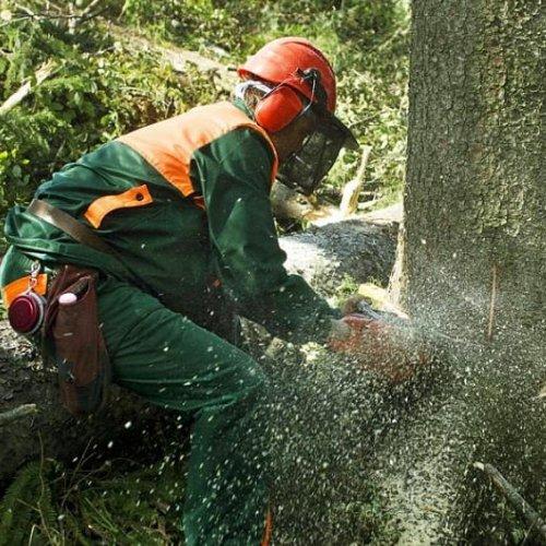 Metsäalalla tarvitaan tulevaisuudessa paljon osaavia työntekijöitä. Erityisesti metsäkoneenkuljettajista, metsureista ja...