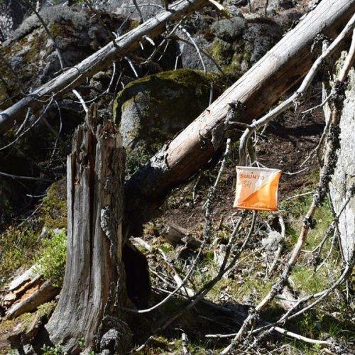 @metsakeskus: Pohjoiseen vai etelään? Itään vai länteen?  Suunnistus on harrastus, joka haastaa kehon lisäksi mielen. 🤔🏃♂️🏃♀️🌲  Metsässä suunnistaessasi pääset liikunnan ja aivojumpan lisäksi nauttimaan raikkaasta ilmasta, metsän tuoksuista ja kauniista maisemista.  Oletko sinä jo kokeillut?  Lue juttu suunnistuksesta Metsään-lehdestä 👉 www.metsaan-lehti.fi  #suunnistus #metsä #harrastus