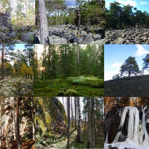 Hyvää puunhalausviikkoa ja hyvää Suomen luonnon päivää! 🌳🇫🇮🌲  Kallioluontoa pidetään karuna, vaikka erilaisissa kall...