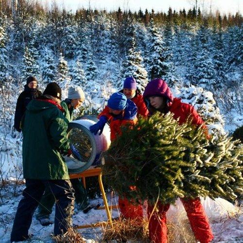 @metsakeskus: Joulukuusen kasvatus on ympärivuotista ja pitkäjänteistä työtä. 🌲🎄 Ennen kuin kuusi päätyy kodin juhlan keskipisteeksi, se vaatii monta vuotta huolenpitoa ja osaavia käsiä.  Heikkilän perhe kasvattaa kuusia Lohjalla. Lue lisää Metsään-lehden jutusta ➡ Metsään-lehti.fi  #joulukuusi #kuusenkasvatus #metsä #metsänhoito #metsänomistaja #joulu #metsäänlehti
