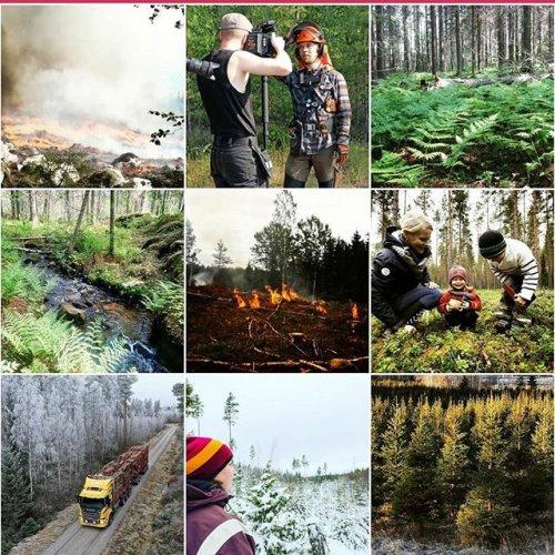@metsakeskus: Kiitos kaikille teille seuraajille tästä vuodesta ja tapaamisiin uudella vuosikymmenellä. ❤✨🎉 #topnine #topnine2019 #metsäkeskus #tb2019 #metsä #metsänhoito #metsänomistaja #luonto #luonnonhoito #monimuotoisuus #metsätiet #kemera #metsäänfi #metsäänlehti