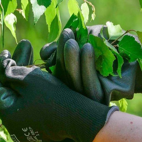 Kannattaisiko oma metsä liittää osaksi luomukeruualuetta? Metsänomistaja voi saada lisätuloa luonnontuotteista, ja luomu...