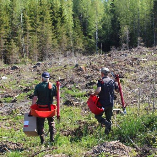 Ilmastonmuutoksen myötä joudumme tekemään muutoksia myös metsänhoitoon. Kuusi on erityisen altis ilmastonmuutoksen aiheu...