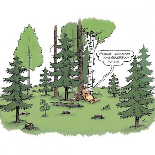 Säästöpuut ovat tärkeitä luonnon monimuotoisuudelle. Säästöpuilla ylläpidetään vanhoja eläviä puita talousmetsissä, ja i...