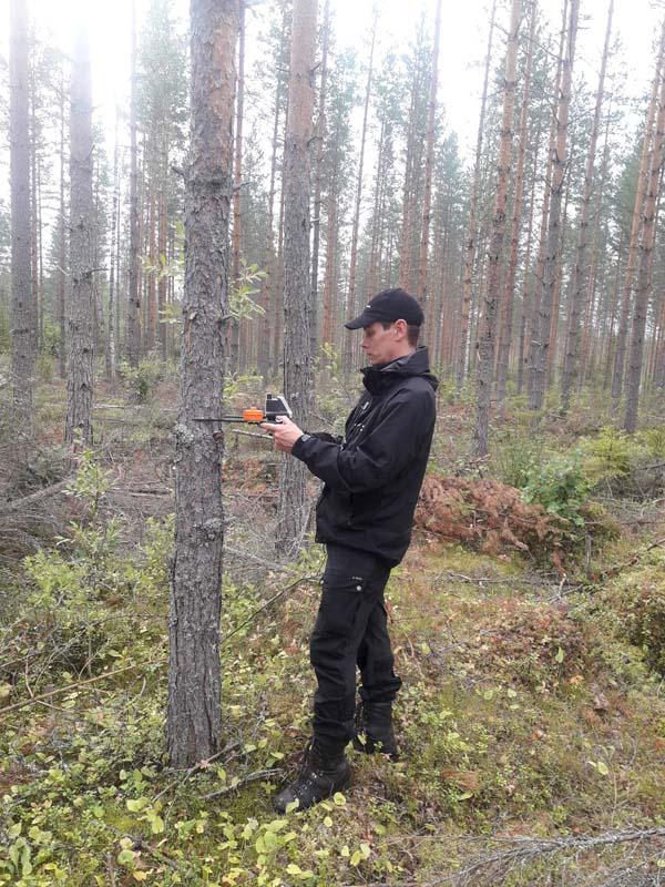 En provyteinventerare mäter stammen på en tall med en mätklave med positionsbestämning. I bakgrunden syns tallskog.