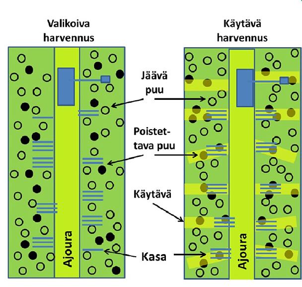 En graf som visar skillnaderna mellan selektiv gallring och korridorgallring. På bilden visas avverkningsmaskinens körstråk och träd som gallras bort och lämnas kvar, samt virkeshögar vid de båda metoderna.
