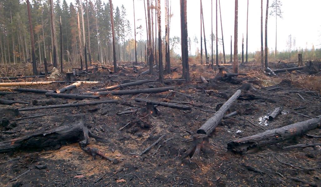 En grupp naturvårdsträd efter att de bränts.