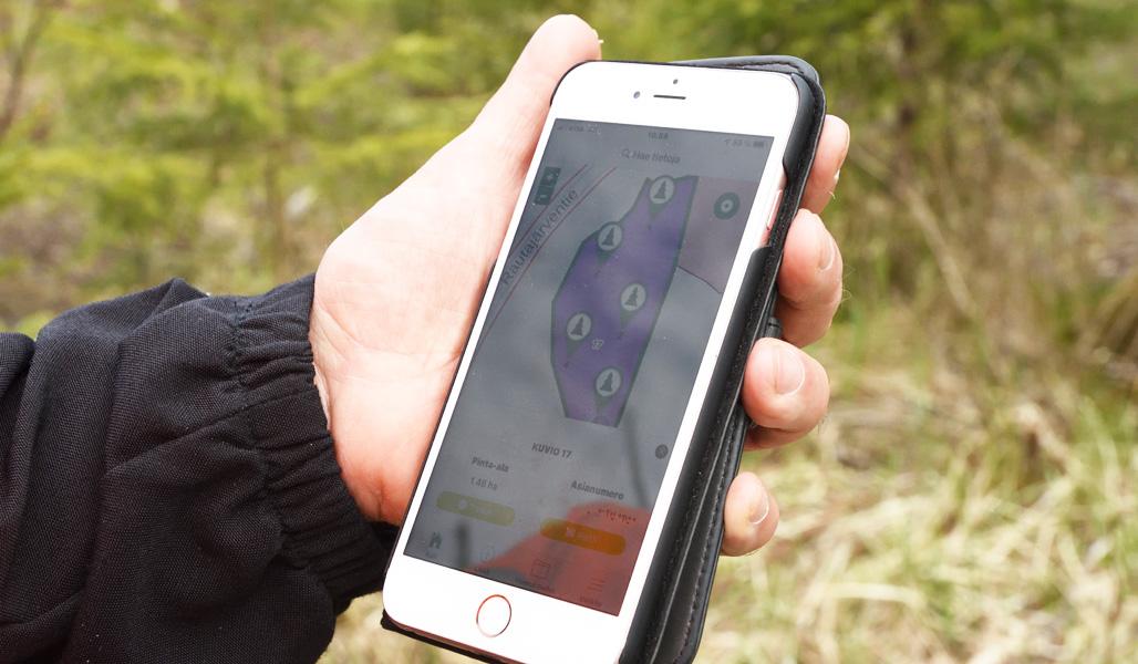 Närbild på en mobiltelefon med Laatumetsä-appen och uppgifter från en provytemätning synliga.