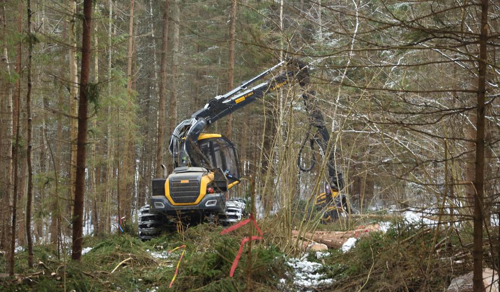 En skogsmaskin i gallrar bort granar vid hasselbuskarna i en vintrig skog.