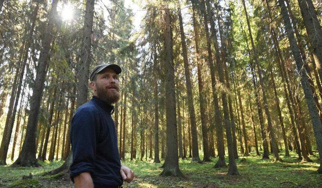 Mika Hämäläinen i sin egen skog. Solen lyser in mellan granarna.