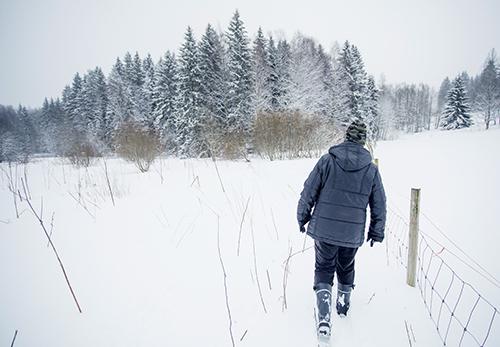 Virpi Saarela går i den djupa snön längs ett fårstängsel mot skogen som syns längre bort.