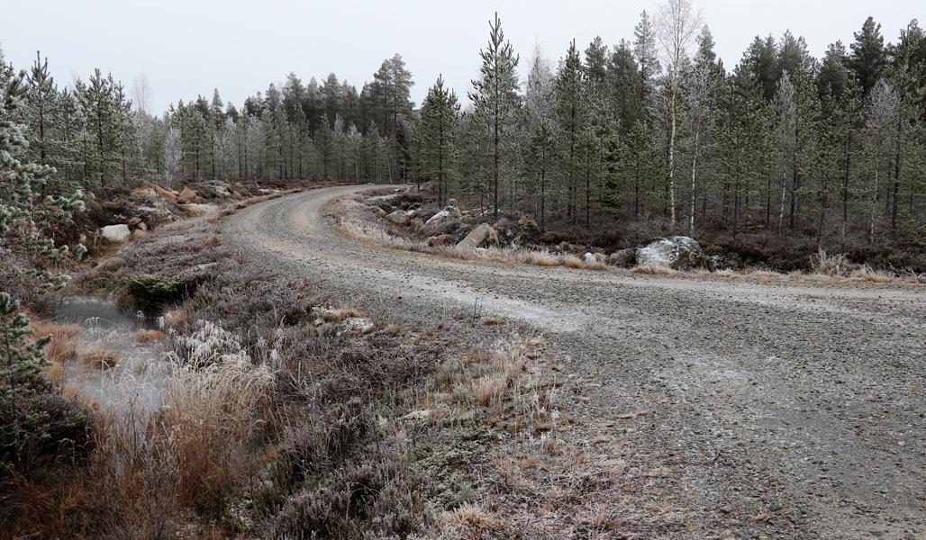 Kuvassa on mutkainen metsätie, jonka ympärillä on metsää.