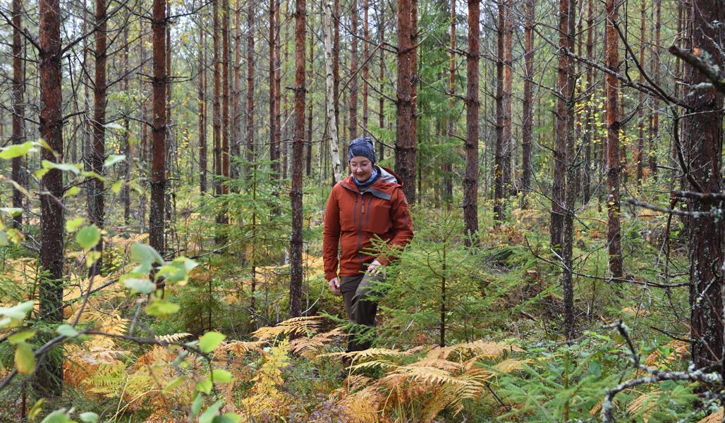 Marika Hänninen går i den gallrade skogen.