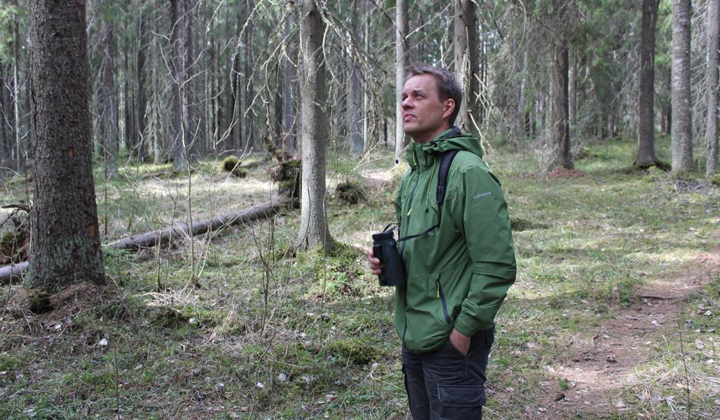 Naturvårdsexperten Jukka Ruutiainen står i skogen med en kikare i handen.
