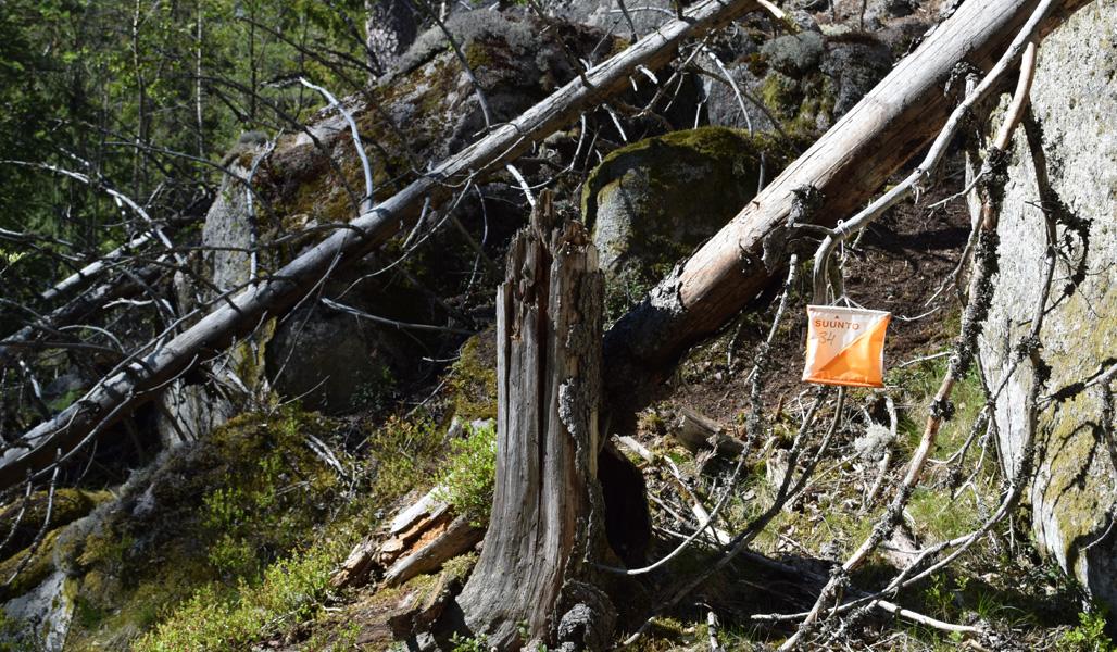 En orienteringskontroll vid ett kullfallet träd.