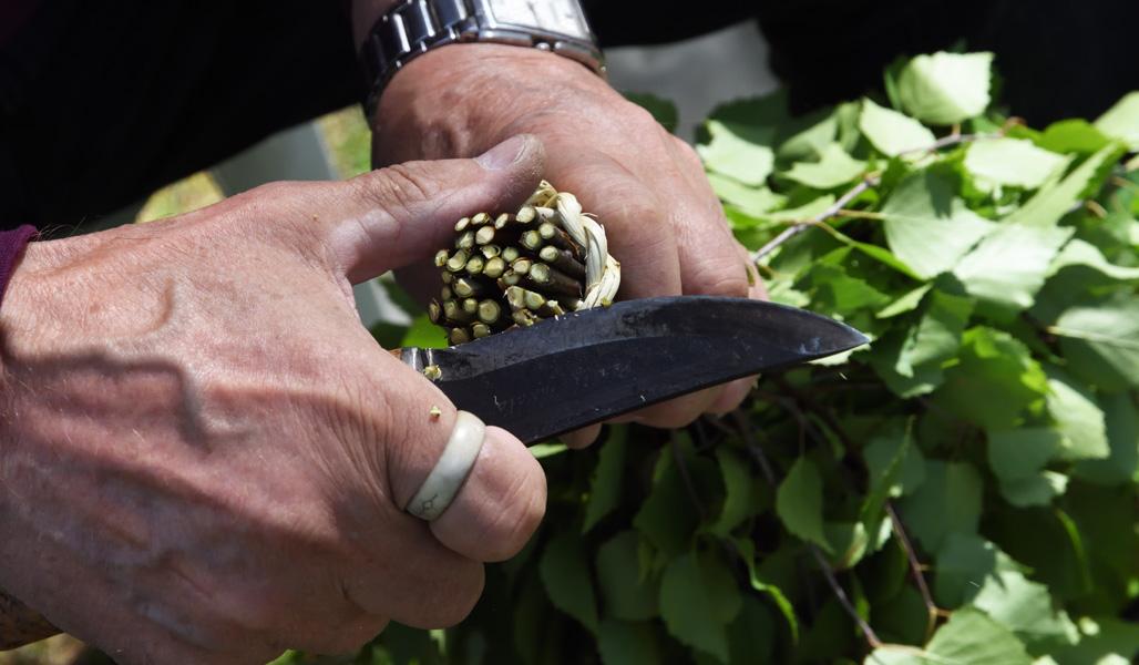 Kviständarna skärs jämna med kniv.